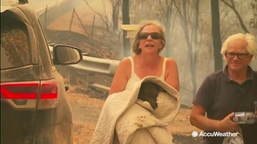 Woman takes shirt off her own back to rescue burning koala