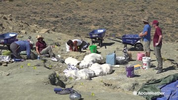 How weather impacts the search for 150 million-year-old dinosaur fossils