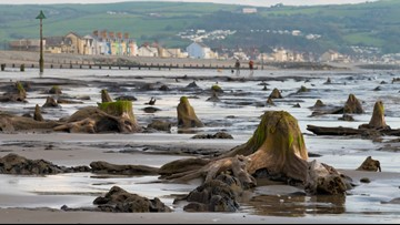 Over 4,500-Year-Old Forest Buried Under a Beach in Wales