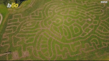 Elaborate, Turtle-Shaped Corn Maze Covers 5 Acres With Over Three and a Half Miles of Pathways