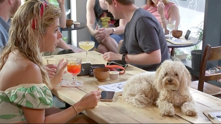 These Dogs Are Have Their Own Bar