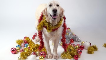 The Holidays and Your Dog, According to Vets