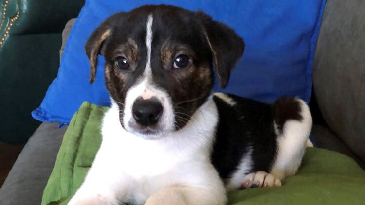 Dog Show-Dog DNA Tests