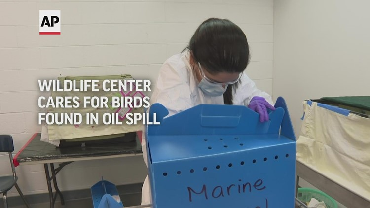 Wildlife center cares for birds in oil spill