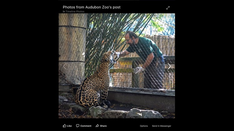 7th animal dies after jaguar escaped habitat at New Orleans zoo