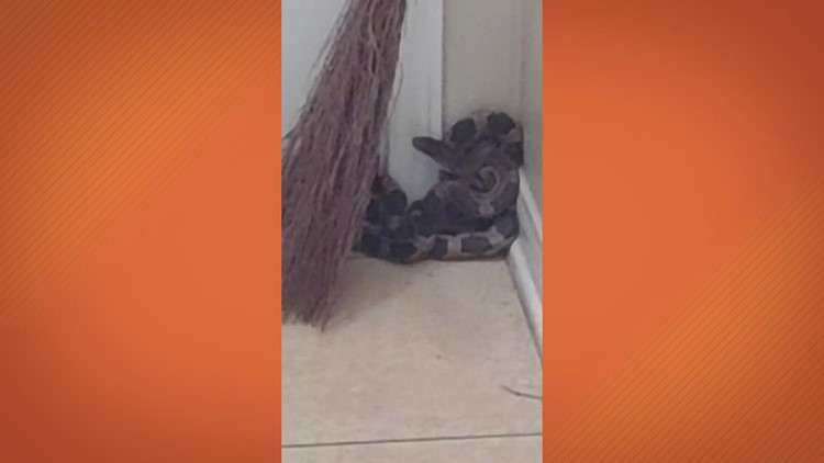 Watch: Texas woman says snake jumped into her home when she went to check on noise at her front door