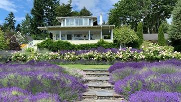 You can stay on a dreamy lavender farm in Washington