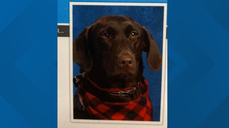 Arkansas service dog poses for first school picture