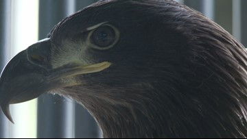 """Eaglet named """"Hope"""" released in honor of Orlando shooting victims"""