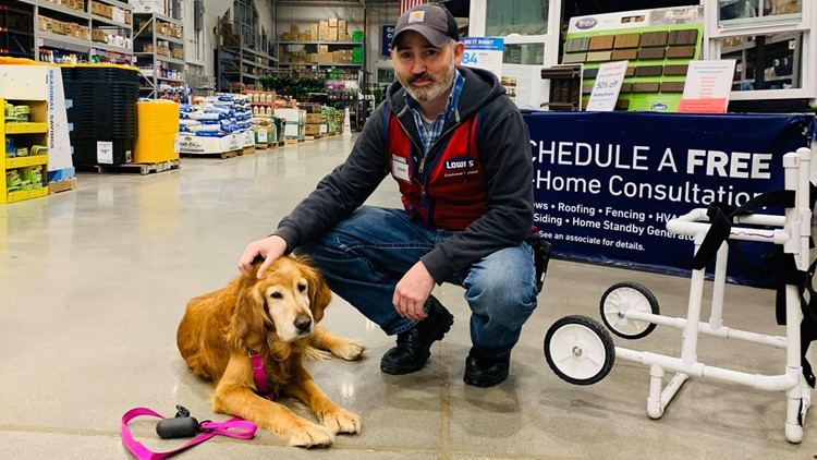 Lowe's employee builds custom wheelchair for injured dog found limping on a highway