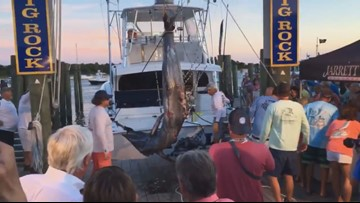 Record-Breaking 914-Pound Marlin Caught at Big Rock Tournament in Morehead City
