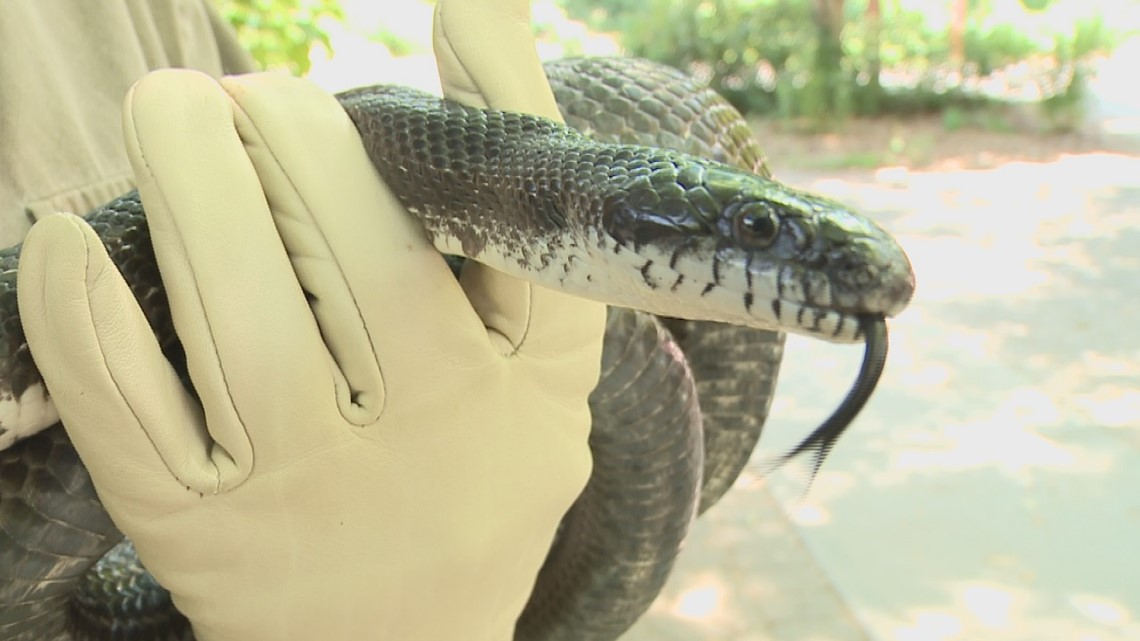 VERIFY: Yes, it is illegal to kill non-venomous snakes in Georgia