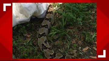 Brunswick woman bitten by rattlesnake dies