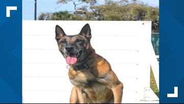 Military working dog, Rex, retires at 10 years