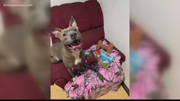 Jacksonville Humane Society will house sexually abused dog who was at risk of being euthanized