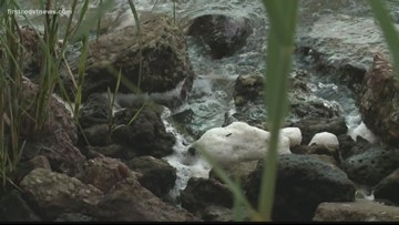 Nestle asking to pump millions of gallons of bottled water from Ginnie Springs