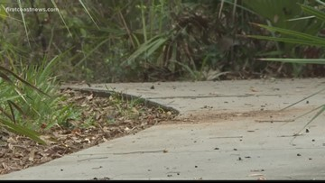 Neighbors: Park in St. Johns County turning into 'dumping grounds' for unwanted pets