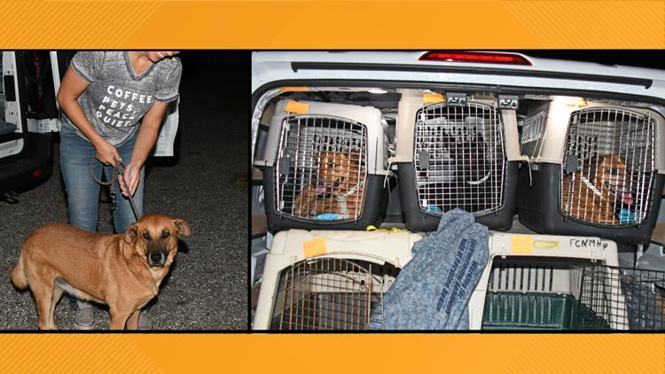 Nassau Humane Society takes in 30 Bahamian rescue dogs in wake of Hurricane  Dorian