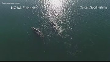 Whale recovery group working to protect critically endangered right whales on First Coast