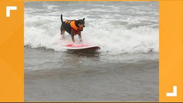 Dog-tober! Dogs allowed on Jax Beach
