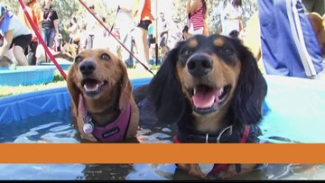 You can 'Strut Your Mutt' in Riverside to help save homeless pets