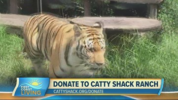 Catty Shack Ranch seeking donations to help take care of big cats
