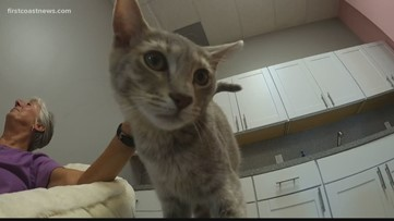 Cat café opens in St. Augustine allowing cat lovers to cuddle a kitty while sipping some coffee