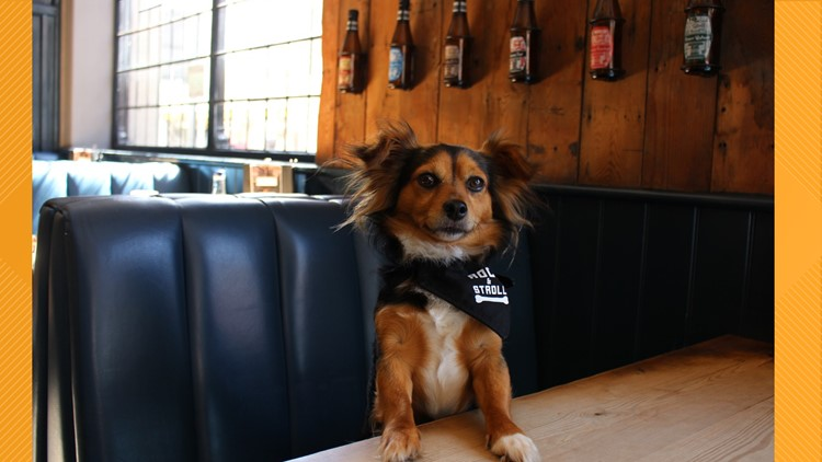 Bill introduced to forbid animals in Florida restaurants, bars, businesses as soon as July