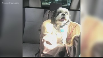 Woman's dog dropped off at Starbucks after it was reportedly stolen with her car