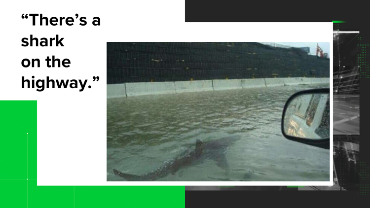 VERIFY: Shark on Highway