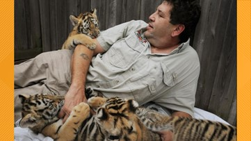 Jacksonville's own 'Tiger King?' Not quite. What to know about Catty Shack Ranch