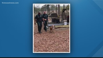 Loyal dog never leaves missing 3-year-old's side after he wanders off in Suwannee County
