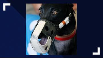 Drug violations in greyhound racing in Orange Park