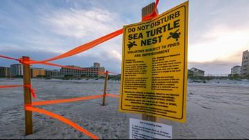 Homeowners push for softer lighting along Jacksonville Beach during turtle nesting season