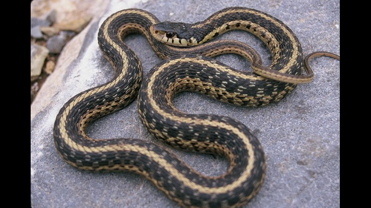 Facebook group quickly helps identify snakes, protect families, wildlife