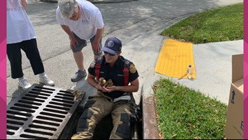 JFRD saves baby geese from storm drain on the Southside