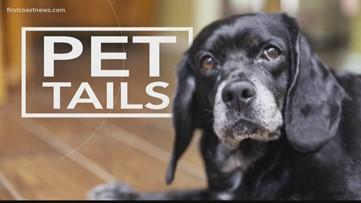 PET TAILS | Meet Midnight, she's the perfect balance between playful, mellow