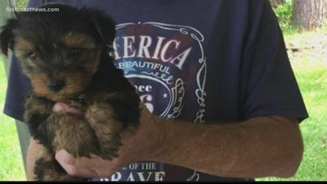 Woman says she paid $260 for a puppy she never received