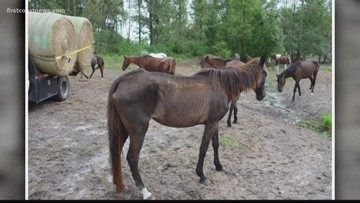 Three arrested in connection to over 50 neglected horses found on Lake Butler property