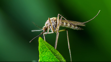 2 additional human cases of West Nile in Duval, brings number to 10