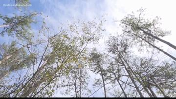 Middleburg land purchase may help reduce Black Creek flooding