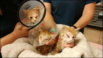 Advice for pet owners after 13 kittens found left in plastic bin