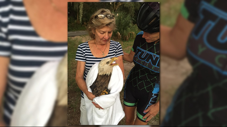 A bald eagle was rescued by a cyclist passing through on the Northside Thursday, according to Cynthia Mosling with BEAKS.