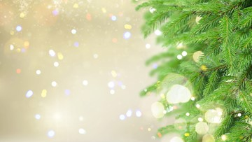 Christmas tree collection services on the First Coast