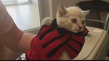 Jacksonville Humane Society: Don't 'Kit-Nap' Kittens