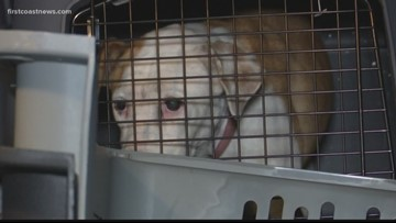 Dogs rescued from Hurricane Dorian arrive in St. Augustine from Bahamas