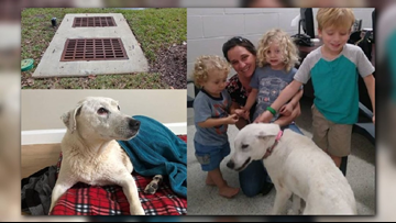 RAW VIDEO: Dog saved from sewer drain in San Jose, reunited with family