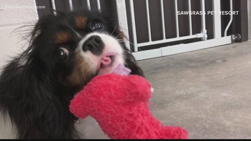 Pet day cares lending a helping hand amid COVID-19 outbreak