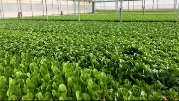 'It's the future of farming': Nassau County farm using fish to farm lettuce