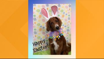 Adorable pups at Ponte Vedra pet resort have Easter photoshoot